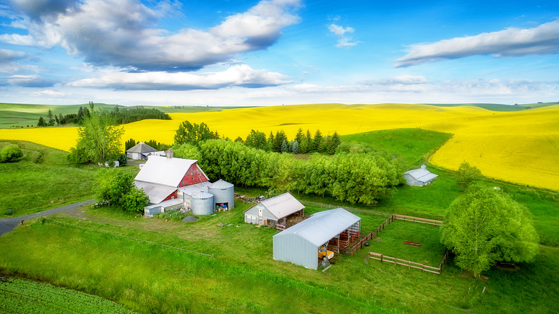 Farm in the Palouse with Canola field in full bloom