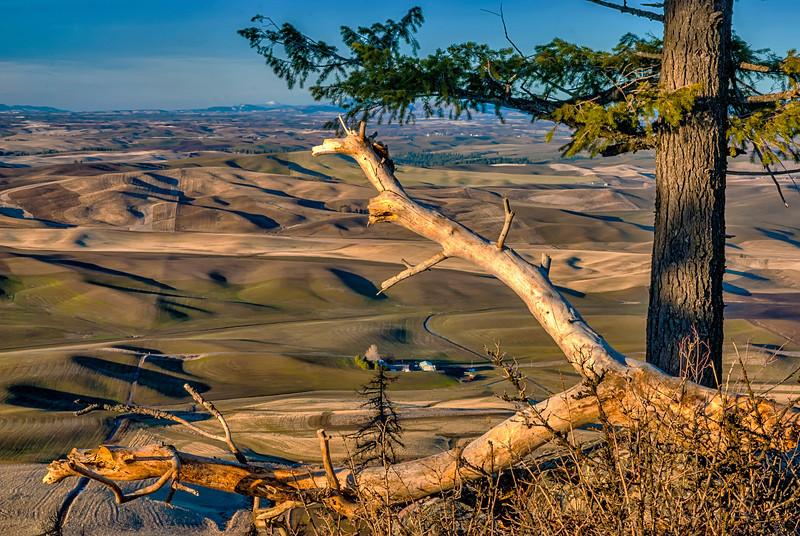 Tree limb frames a farm amung rolling hills