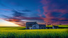 Dramatic sunrise over a Canola field with abandoned schoolhouse