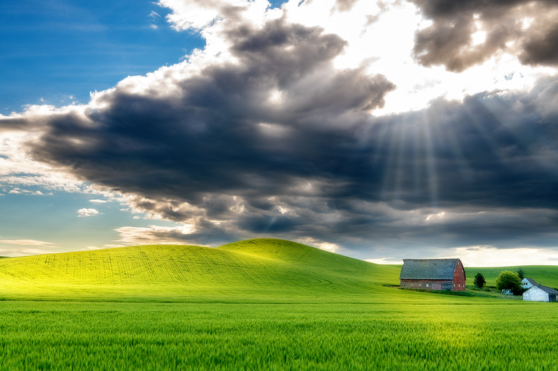 Sunrays shine down on the top of a red barn in a green field of wheat