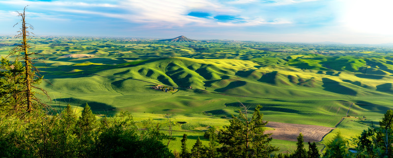Lush green rolling hills of the Palouse with Steptoe Butte