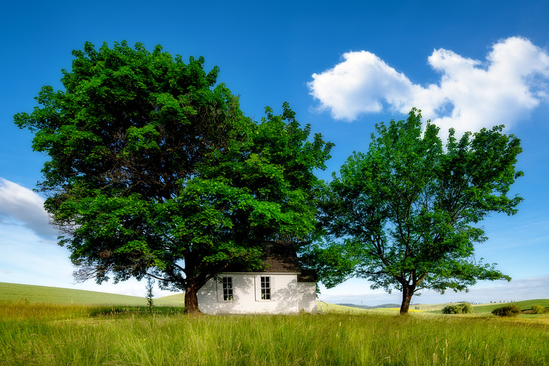 Rural Church with trees in summer