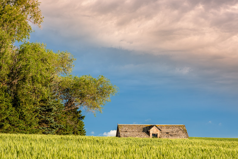 Wheat Field and barn top with dramatic sky