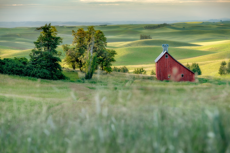 Rolling hills of the Palouse lit by the sun with a red barn