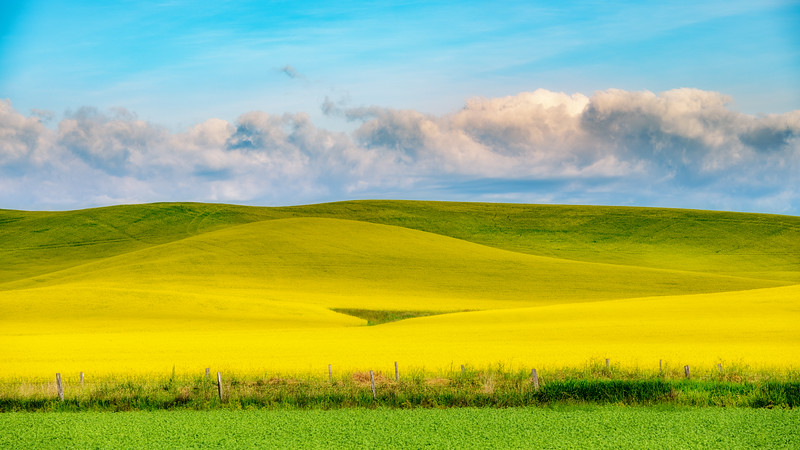 Agriculture layers of color and textures with Canola