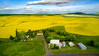 Country farm with Canola Field