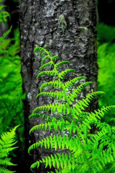 Fern in a damp forest