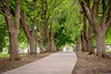 Sidewalk lined with trees in an Idaho park