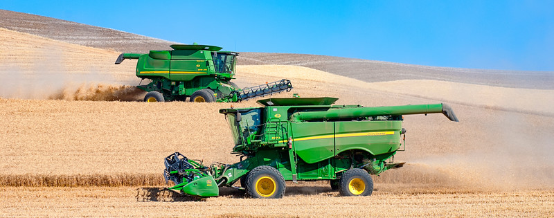 Two combine harvesting wheat in the Palouse