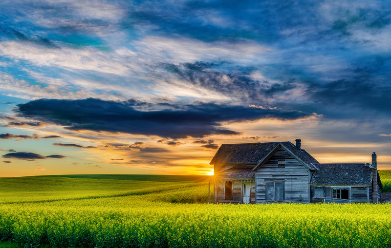 Sunrise over Canola fields with an old homestead