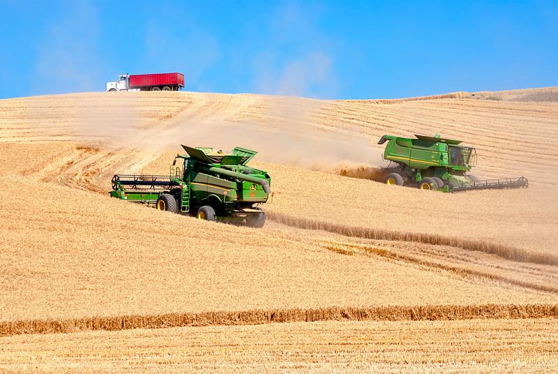 Combines and grain truck work to harvest
