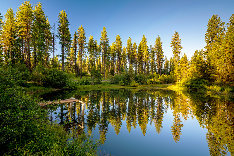 Pond surrounded by forest in the Idaho mountains