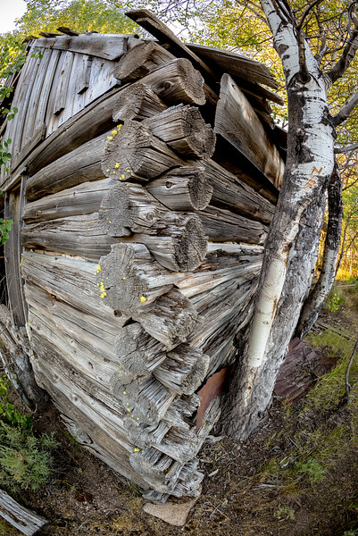 Corner of a log cabin and Aspen trees
