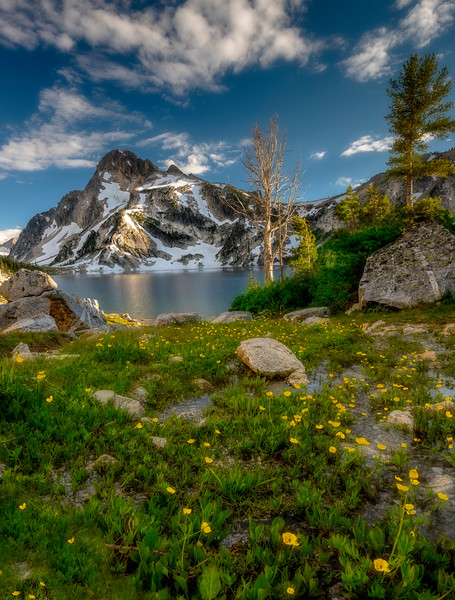 Wild flowers and mount Regan with a glimps of Sawtooth Lake