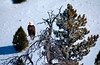 Bald Eagle--Salmon River--Stanley, Idaho