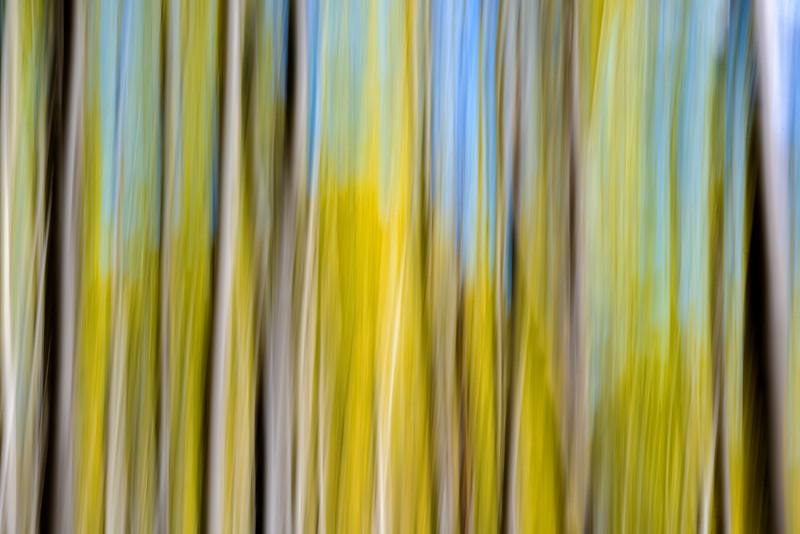 Autumn Aspen grove abstract with blue sky