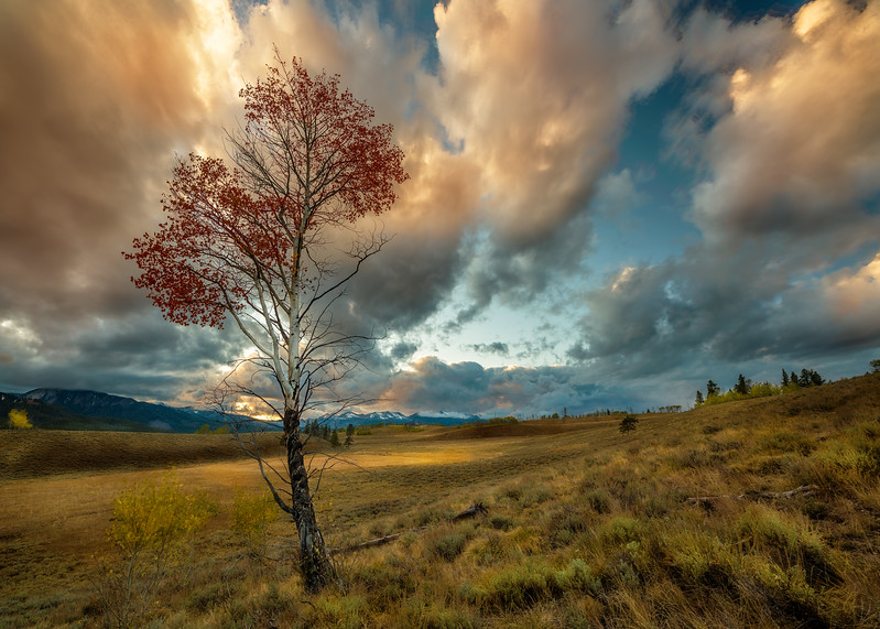A trip to the Sawtooths last weekend was probably one of my most productive. There was such a variety of different weather conditions. After a long day of rain the clouds broke for a dramatic sunset. I chose this little Aspen tree because it had red leaves on it. This Aspen lives just off of Galena summit.