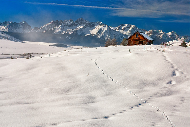 Animal tracks in the snow and old cabin