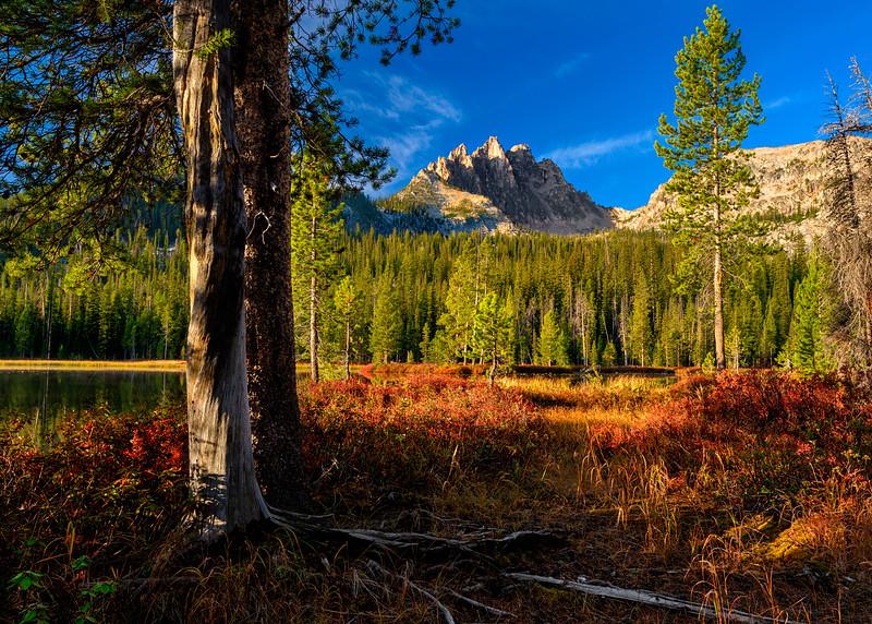 Pine trees and roots Bench Lake Idaho