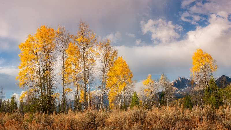 Fall trees in the Sawtooth mountains