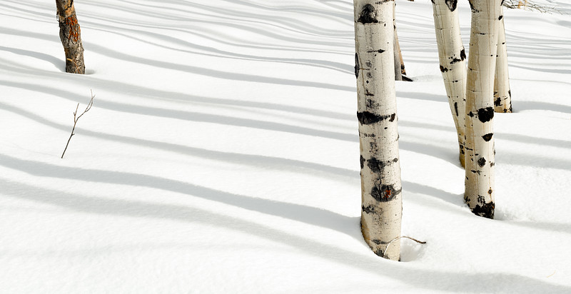 Shadows from Aspen grove draw lines on the snow