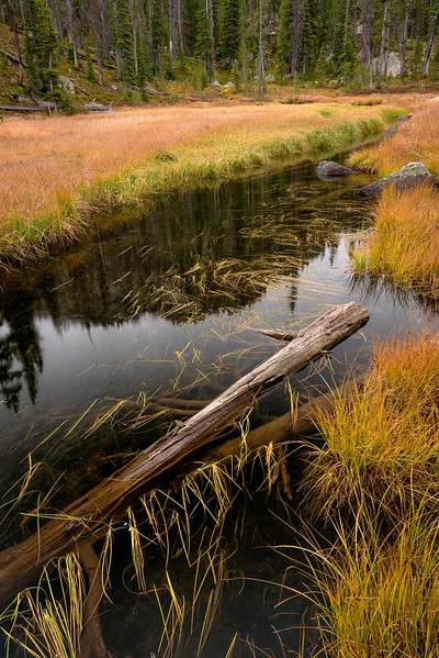 Sawtooth National Forest stream with grass and log