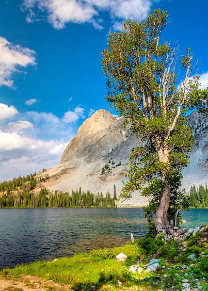 Lone tree and El Capitan Alice Lake Idaho