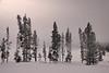 Winter savage landscape
