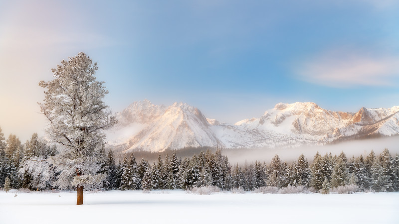 Sawtooth Range in winter with a lone tree