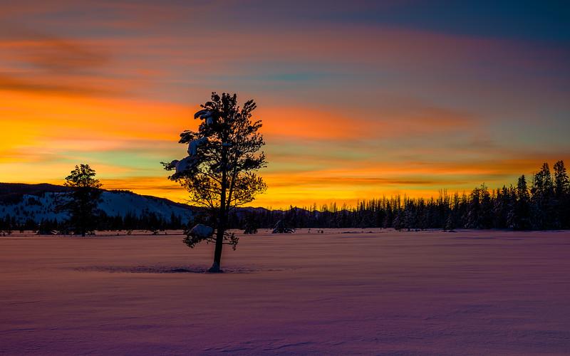 Silhouette of trees aginst an orange morning sky