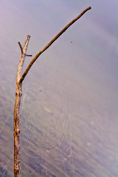 Spiderweb and branch with dew