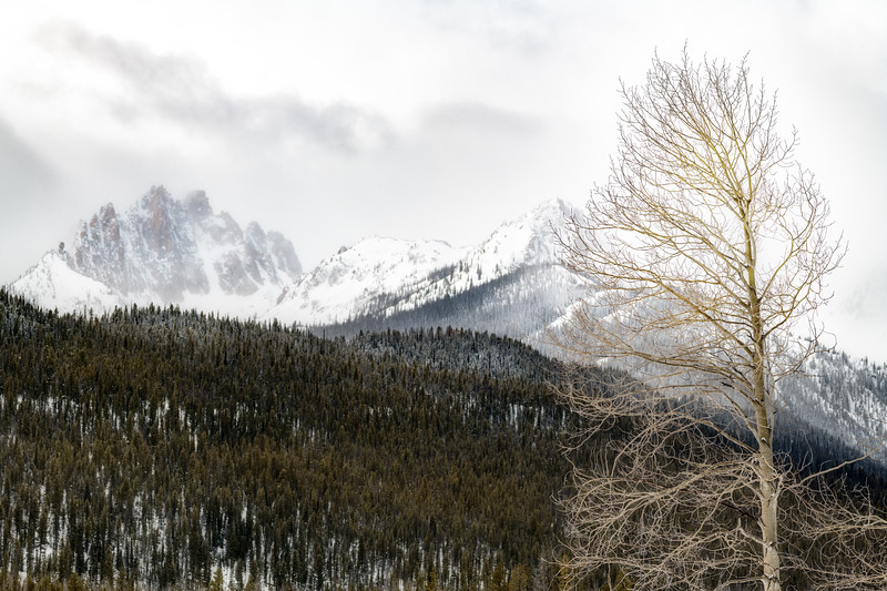 Winter forest and Aspen tree with Mt. Hayburn