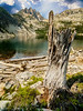 Middle Bench Lake with tree stump and Heyburn reflectio