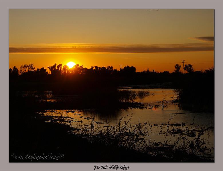 Yolo Bypass Wildlife Area