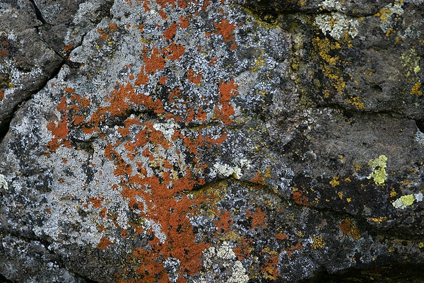 Lichen on the Shadier Side of Town