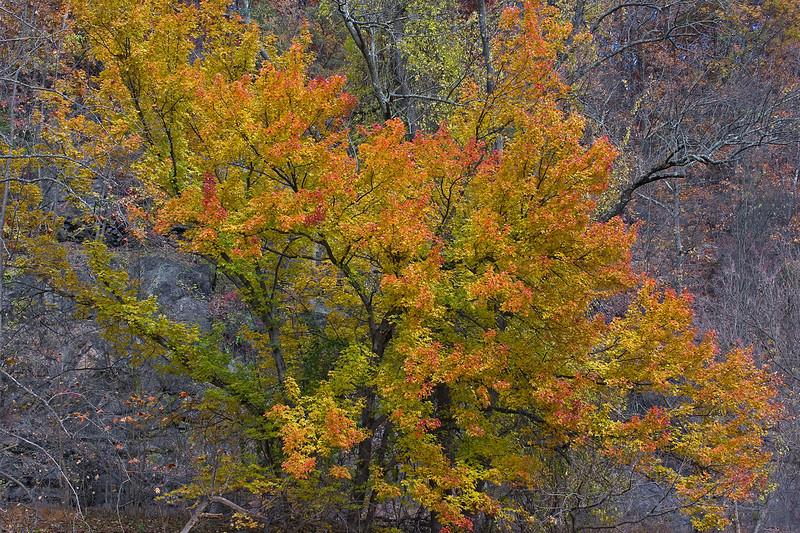 Tree near the river