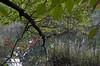 Under a branch