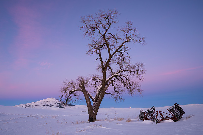 #304 Winter Tree, Palouse WA