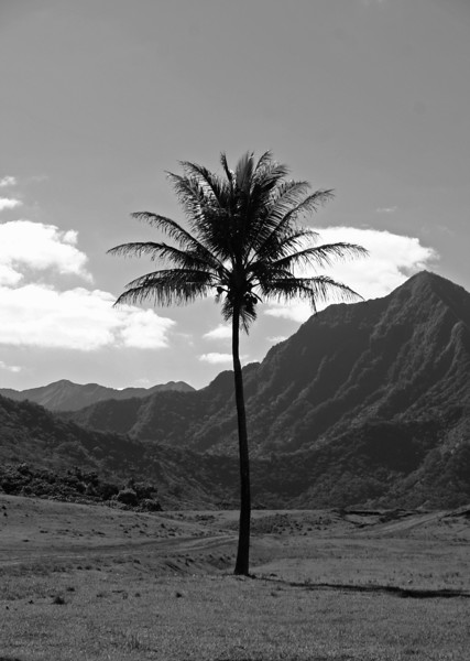 cropped palm and mountains