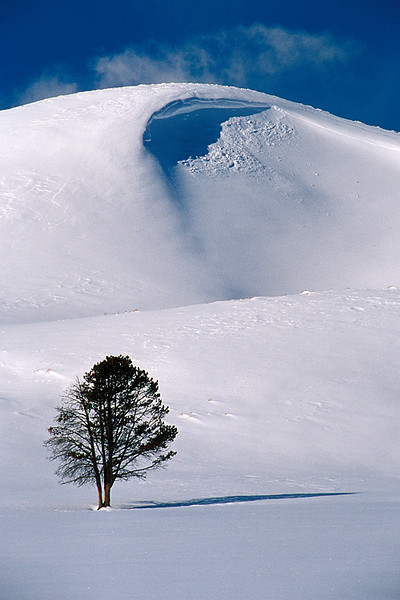 #44 Tree in Winter, Yellowstone NP, WY