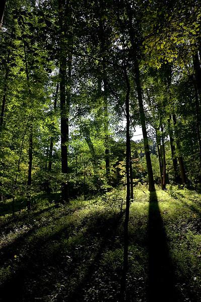"""""""My"""" woods"""
