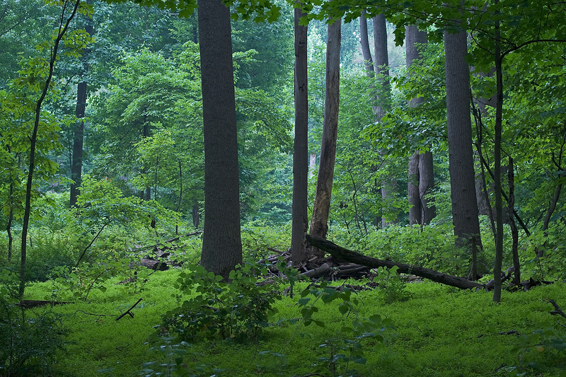 Humid woods