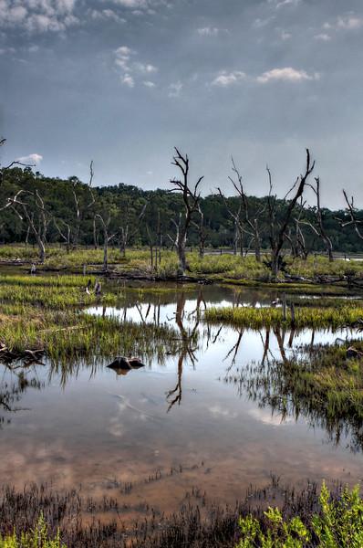 IMG_9259HDR dead marsh