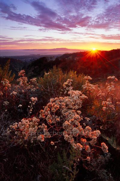 Sunset Sage Oakland Hills, CA