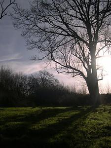 Landscape-015