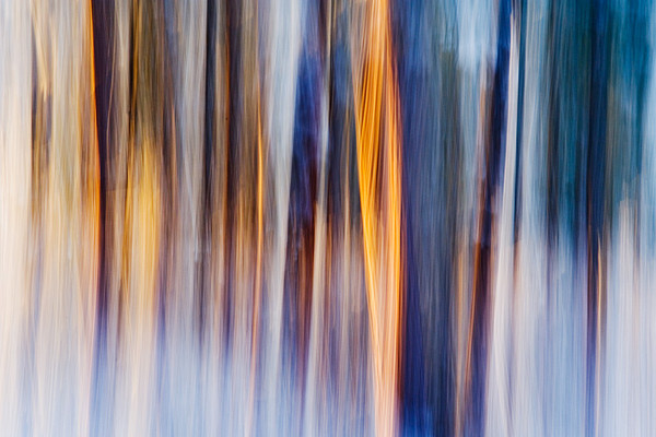 #225 Winter Pines 2