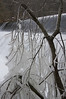 Iced tree at the Bloedes Dam