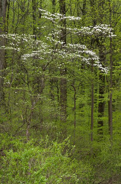 Spring in the Patapsco River Valley