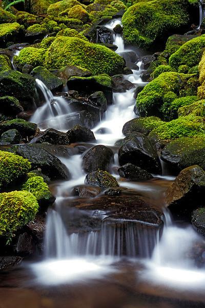 #62 Creek, Olympic NP, WA
