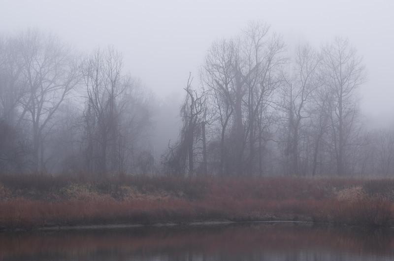 Warmth of a fog